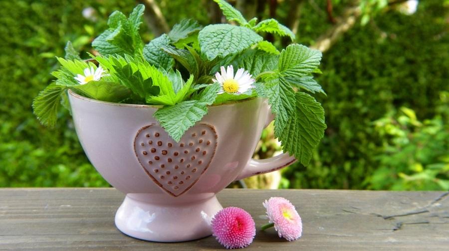 herbes-fleurs-plantes-tasse