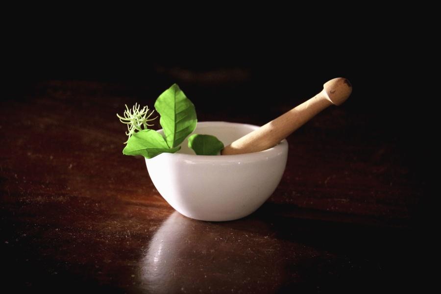 plantes-bol